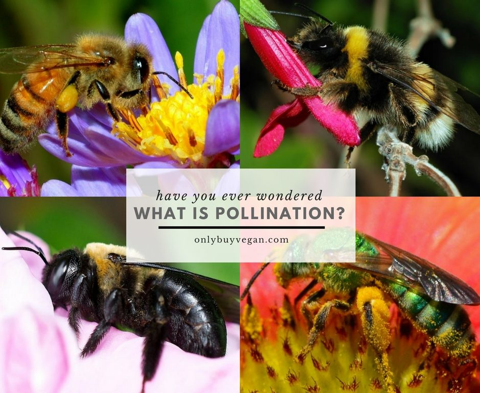 what is pollination cover pic