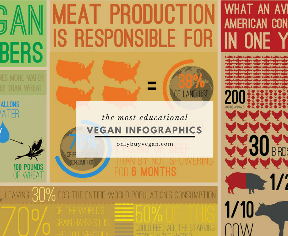 vegan infographic cover pic